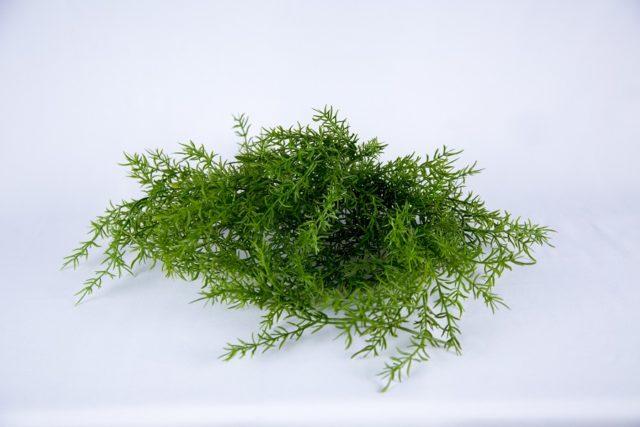 ABH-Deco - algue artificielle